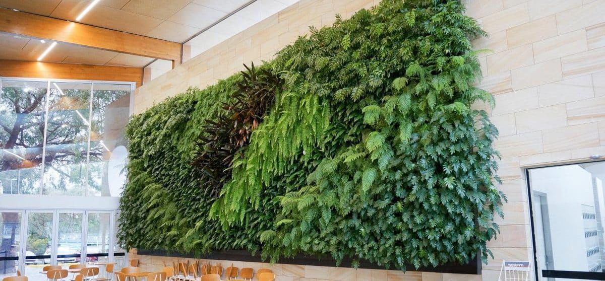 Wertykalny ogród - żywa ściana z roślin w Twoim domu 1