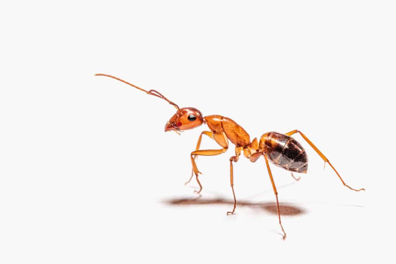 Jak skutecznie zwalczyć mrówki w domu? 1