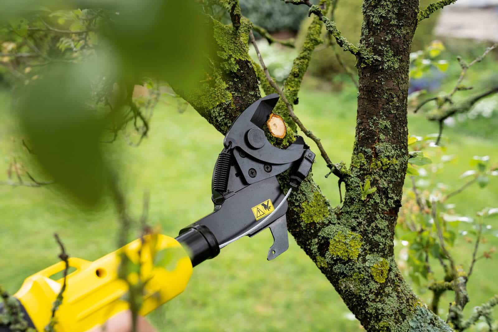Jakie drzewa i krzewy przycinamy jesienią? Jak to robić? 1