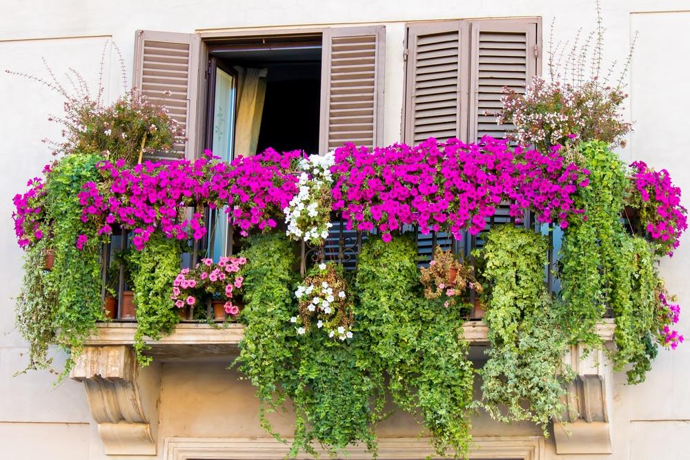 Jakie Kwiaty Na Balkon Wybrac Najladniejsze Kwiaty Balkonowe Dom Na Nowo