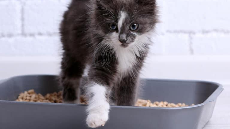 żwirek dla kotów