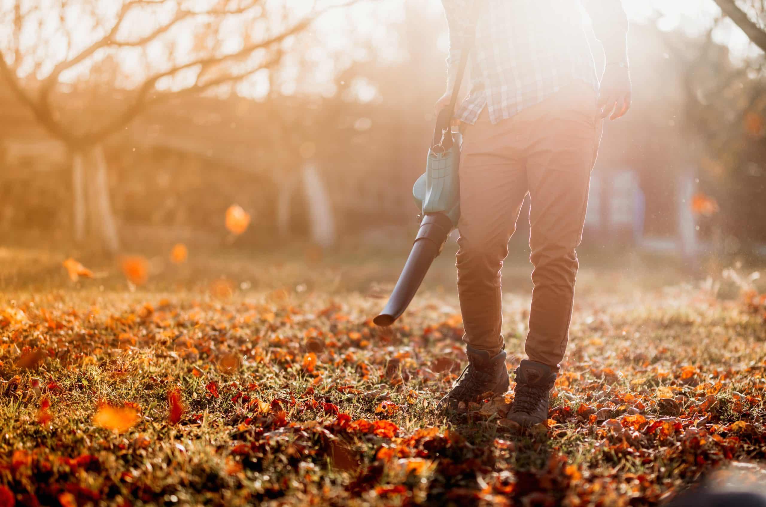 Jesienne prace w ogrodzie- na jaką dmuchawę do liści warto się zdecydować? 1